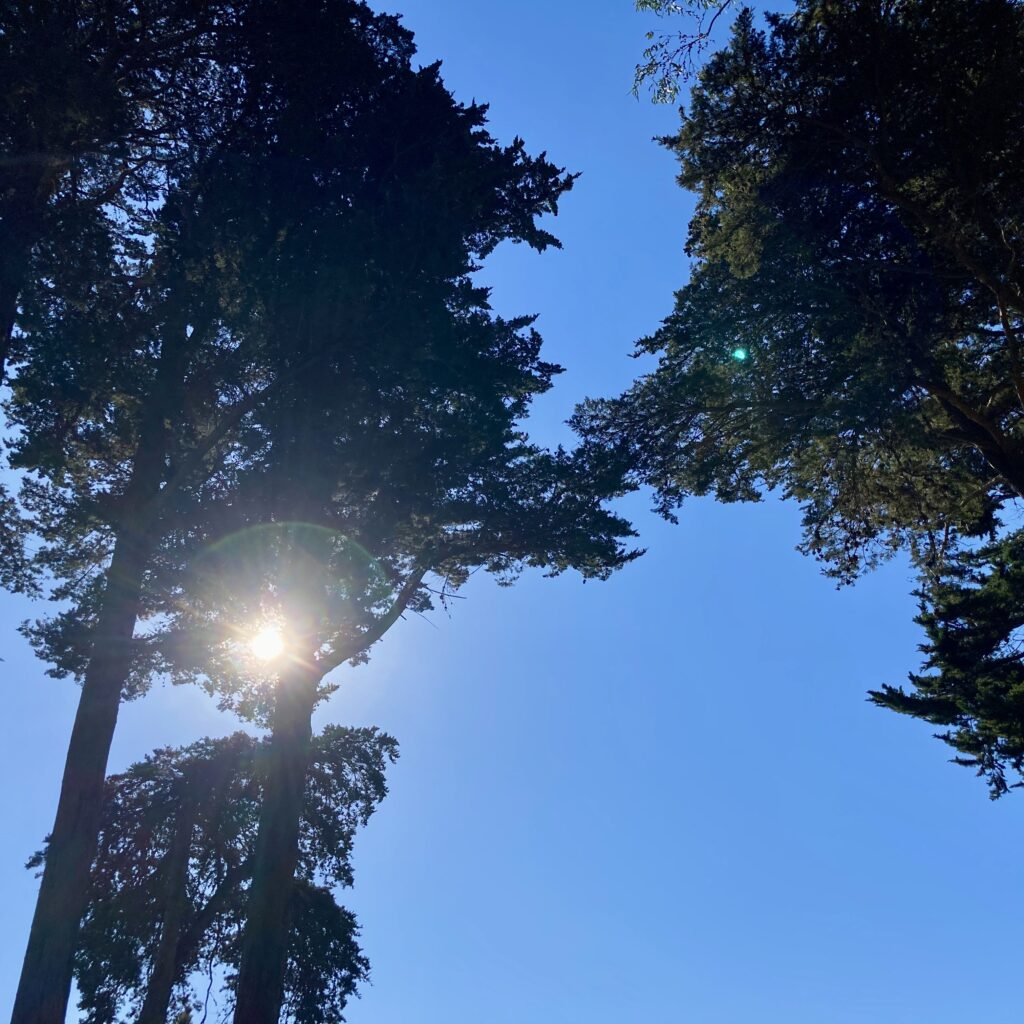 Three tall trees silhouetted against a blue sky. The sun breaks through the trees on the left, producing a lens flare.